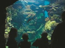 Burgers Zoo Marine Ecosystem - ecosystems study tours to The Netherlands