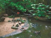 Burgers Zoo Rainforest Ecosystem -study tours to The Netherlands