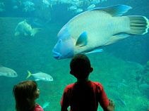 Aquarium at Nausicaa