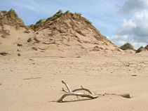 formby dunes opt